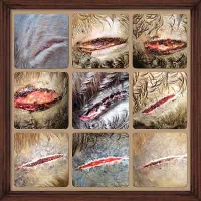 Pro Equine Grooms - The Stages of Wound Healing in Horses