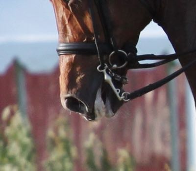 Pro Equine Grooms - Why Horses Get Foamy Mouths and Bits!