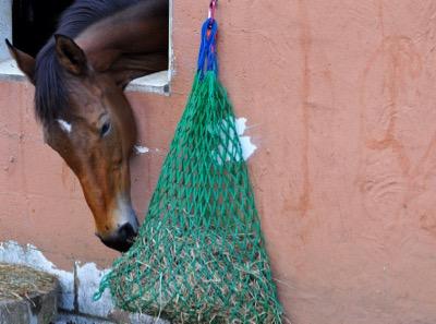 Horse Treat Ball Hay Feeder for Horse Trailer Stall