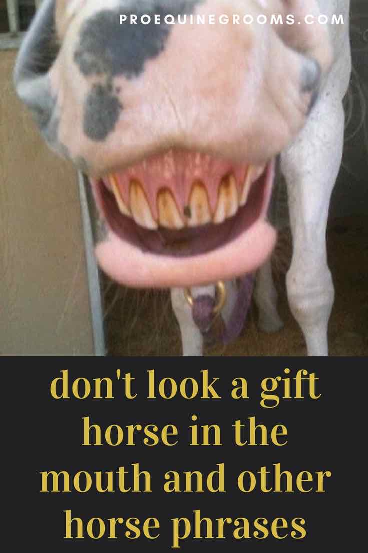 Origins of Horse Phrases - Don't Look a Gift Horse in the Mouth