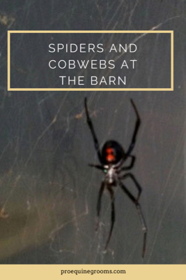 pro equine grooms dealing with cobwebs and spiders at the barn