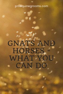 Pro Equine Grooms - Gnats and Horses - What You Can Do