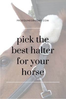 Picking and Fitting a Halter For Your Horse