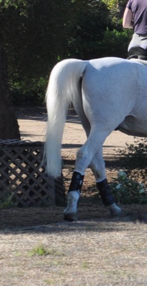 Pro Equine Grooms Keeping Your Horse S Tail White