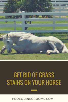 Get Rid Of Grass Stains Horse Canva Jpg
