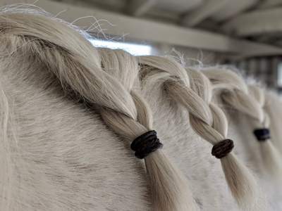 Pro Equine Grooms How To Take Care Of Your Horses Thick Mane