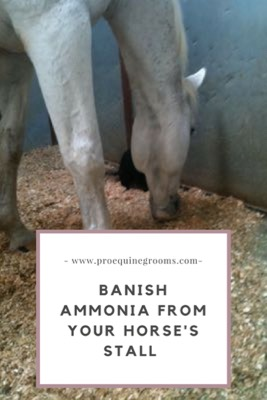 Pro Equine Grooms - That Ammonia Smell in Your Horse's Stall