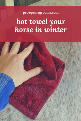 Hot Toweling your Horse! Great for Winter Deep Cleaning!