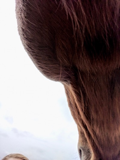 Pro Equine Grooms - Swollen Glands (maybe) in Horses