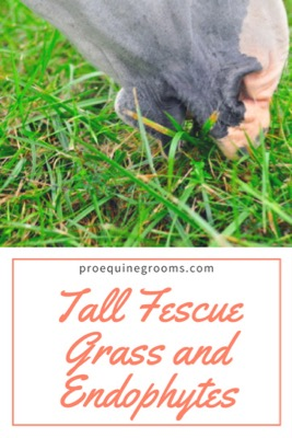 Tall Fescue Grass and Endophytes - How Horses are Affected