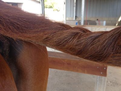 Pro Equine Grooms How To Clean Your Horses Mane And Tail In Winter
