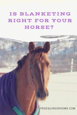 To Blanket or Not to Blanket Your Horse