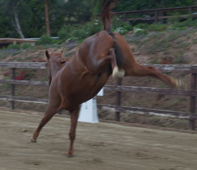 Horse Behavior and Training - cover