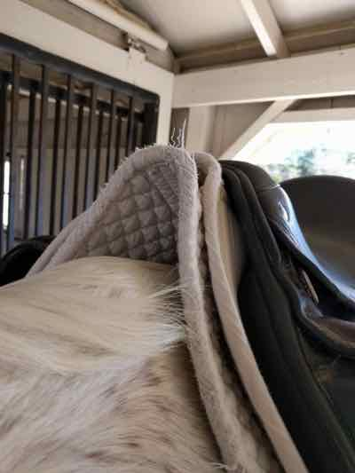 The Saddle Pad and Saddle Placement Guide!
