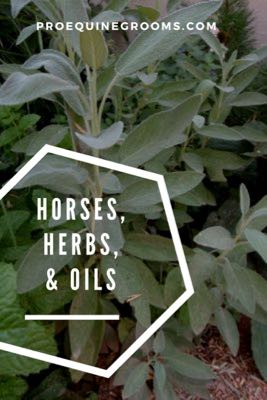 More on Herbs, Essential Oils, and Horses!