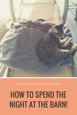 Pro Equine Grooms Tips For Spending The Night At The Barn