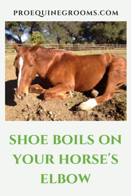 Pro Equine Grooms - Shoe Boils on Your Horse's Elbow - Panic