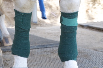 4b1e162191 Pro Equine Grooms - The Case for Polo Wraps Over Sport Boots