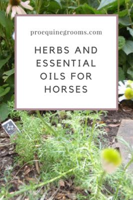 Herbs, Essential Oils, and Horses!
