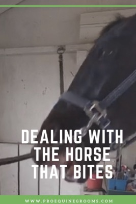 Does Your Horse Try to Bite? Nip it in the Bud!